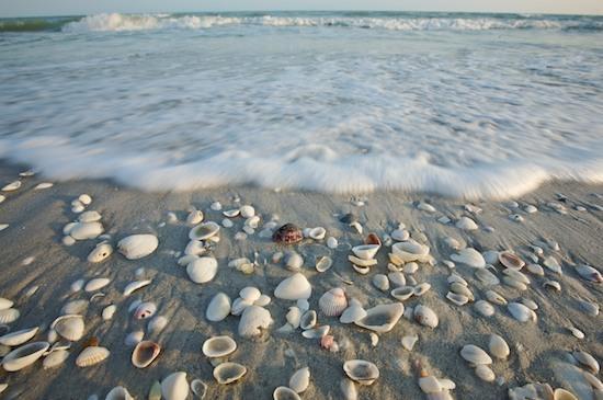Lucruri uimitoare descoperite pe plaja